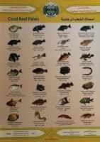 """Übersichtskarte """"Fische im Korallenriff"""""""